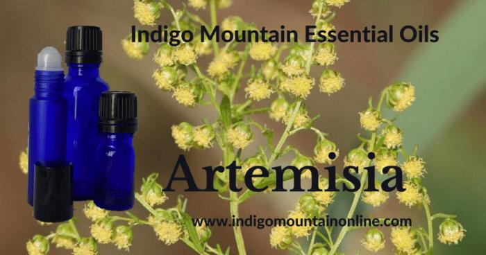 Artemisia Essential Oil