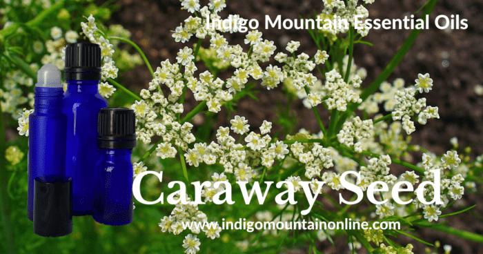 Caraway Seed Essential Oil