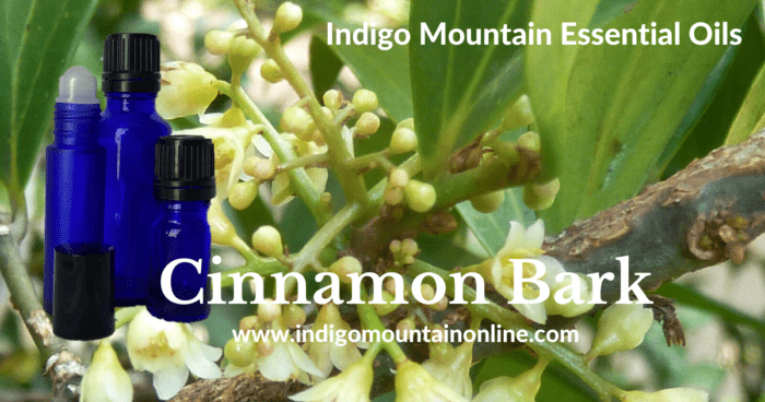 Cinnamon Bark Essential Oil