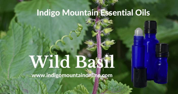 Wild Basil Essential Oil