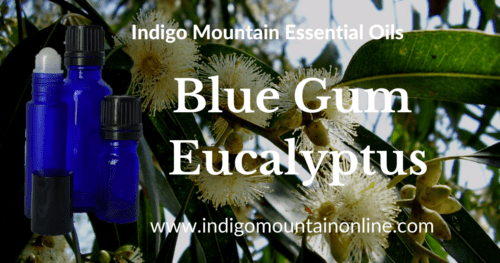 Blue Gum Eucalyptus Essential Oil