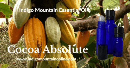 Cocoa Absolute Essential Oil