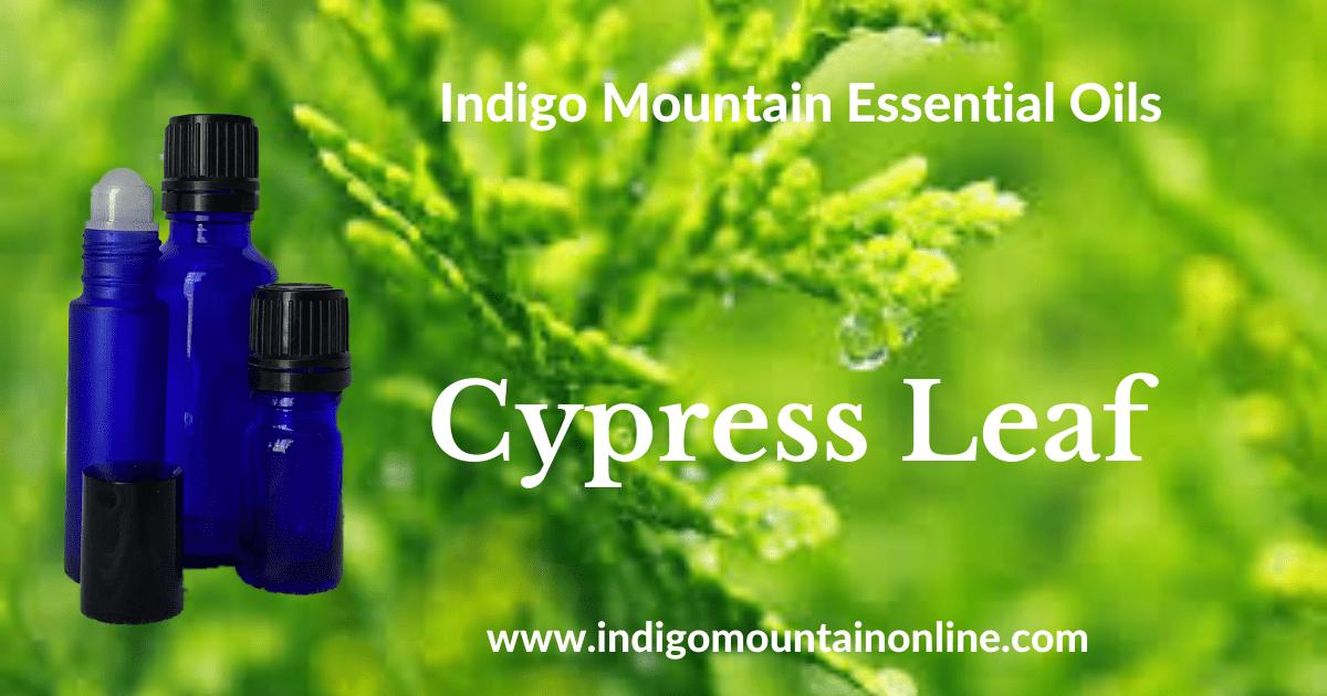 Cypress Leaf Essential Oil