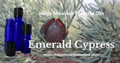 Emerald Cypress Essential Oil