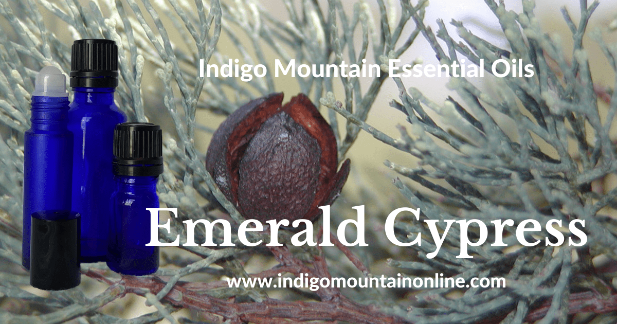 Emerald Cypress Essential Oil