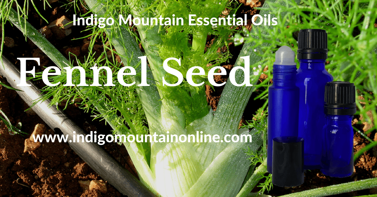 Fennel Seed Essential Oil