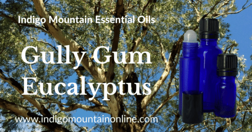 Gully Gum Eucalyptus Essential Oil