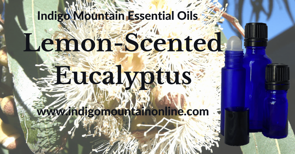 Lemon-Scented Eucalyptus Essential Oil