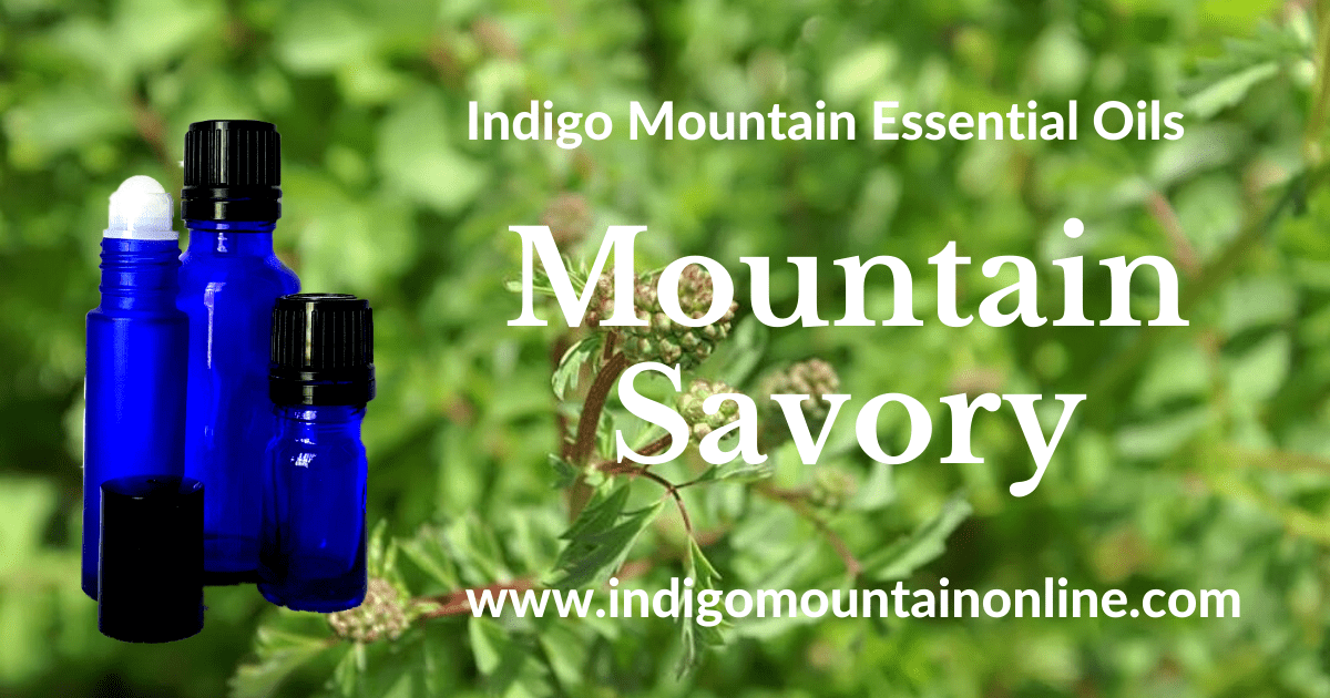 Mountain Savory Essential Oil