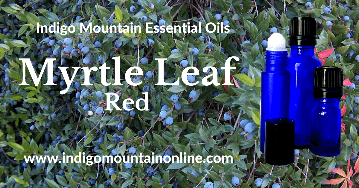 Myrtle Leaf Essential Oil