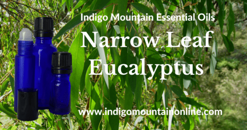 Narrow Leaf Eucalyptus Essential Oil