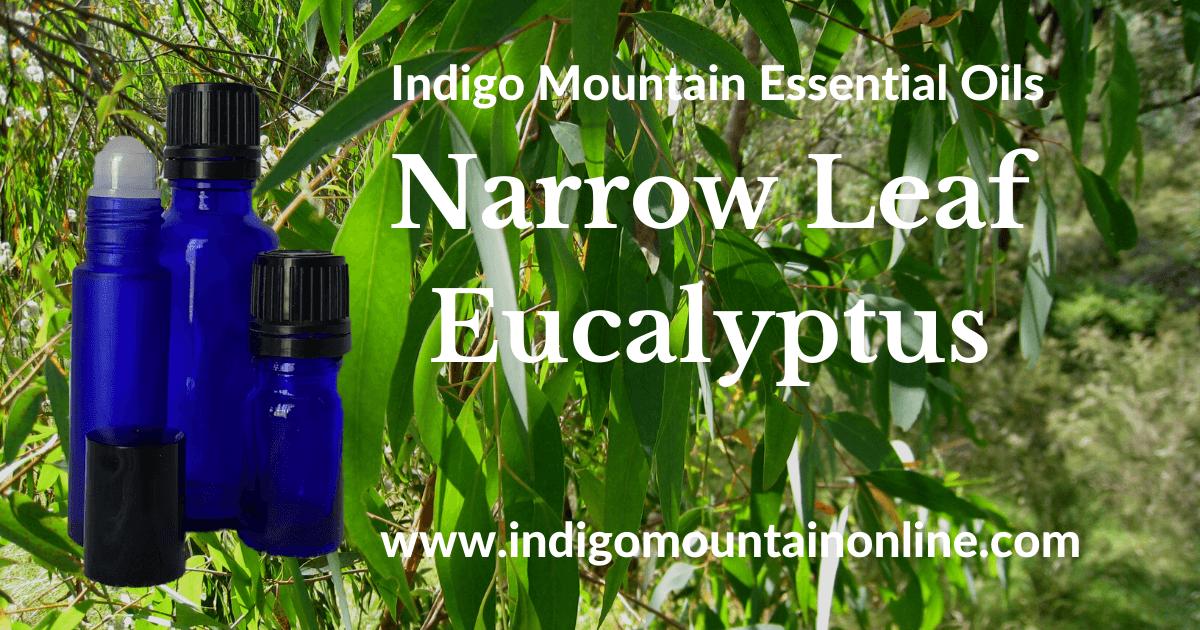 Narrow Leaf Eucalyptus Essential Oil