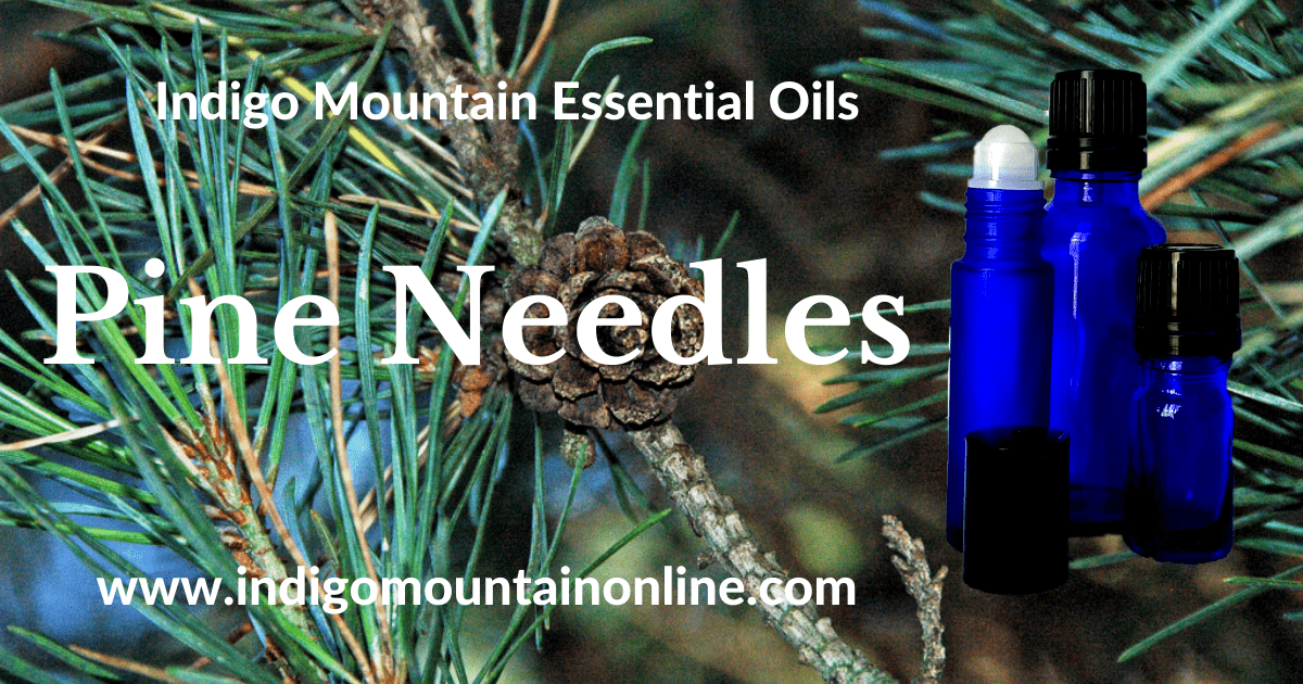 Pine Needles Essential Oil